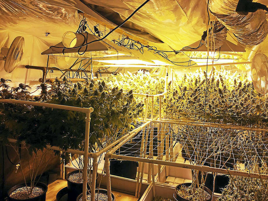 Two men and a woman were arrested Tuesday after authorities allegedly found dozens of mature marijuana plants and more than two pounds of packaged marijuana in a home at 29 Wildwood Lane in East Hampton. Photo: Photo Courtesy Connecticut State Police