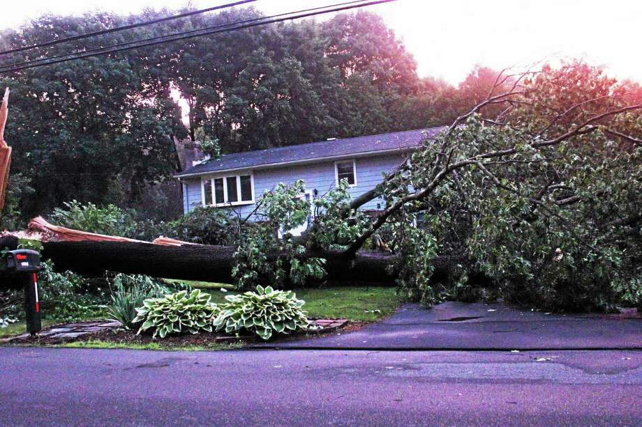 A tree knocked down in front of a house on Hartford Turnpike Tuesday evening after a possible small tornado or microburst was reported. Photo: (Kate Ramunni - New Haven Register)
