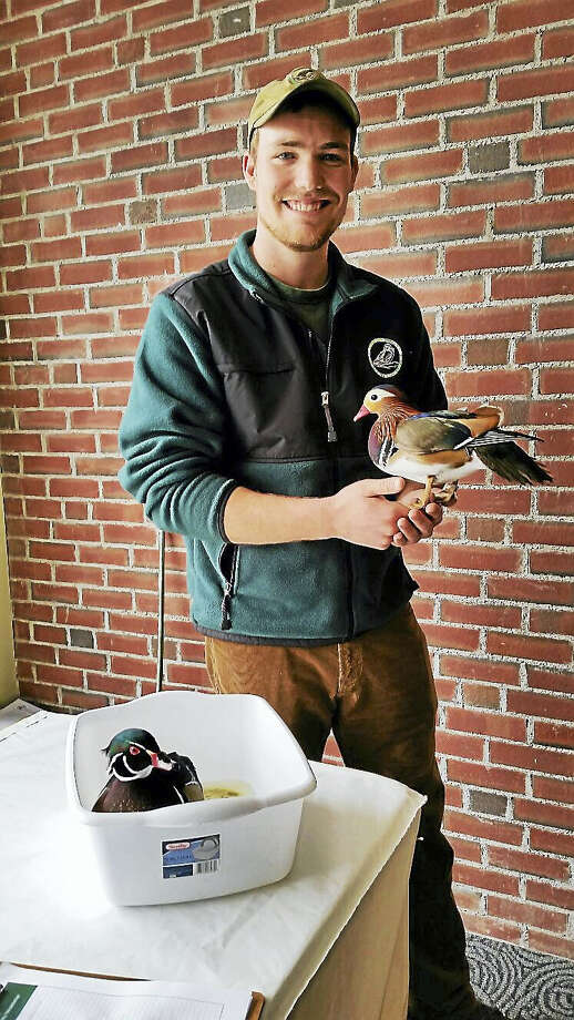 Biologist Ben Sonnenberg of the Livingston Ripley Waterfowl Conservancy of Litchfield introduced children to Cheerio, a mandarin duck at right, and Woody, a wood duck. Photo: Photo By N.F. Ambery
