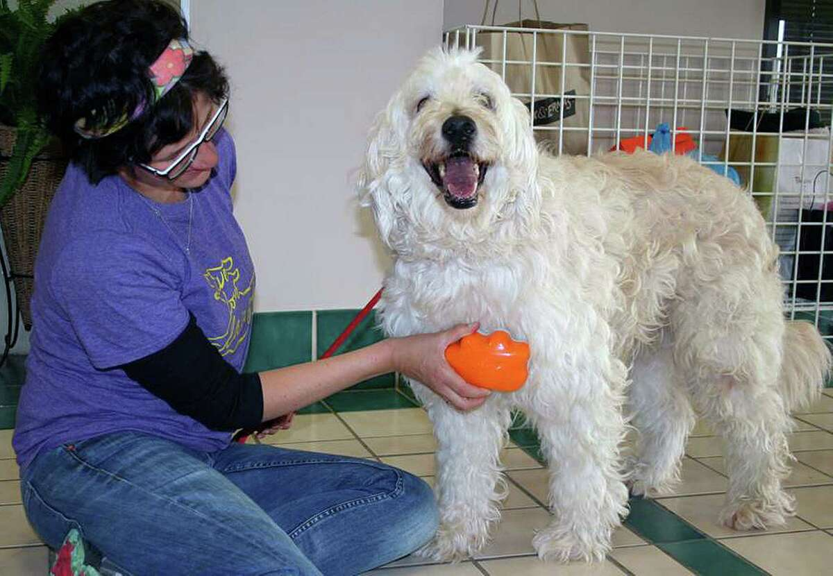 An employee at the Capital Area Humane Society in Columbus, Ohio, brushes adoptable dog Princess with an orange Groom Genie. Before she ever sold one, inventor Rikki Mor of Denver donated the brushes to several shelters across the country.