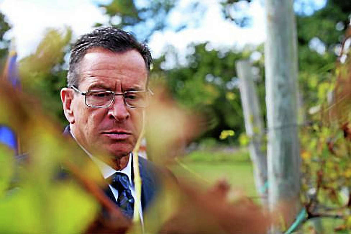 Gov. Dannel P. Malloy inspects the grapes at Priam Vineyards in Colchester.