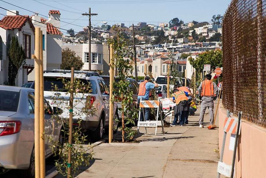 Newly planted tree line the sidewalks of Balboa High School in San Francisco, Calif. Saturday, August 26, 2017. Photo: Mason Trinca, Special To The Chronicle