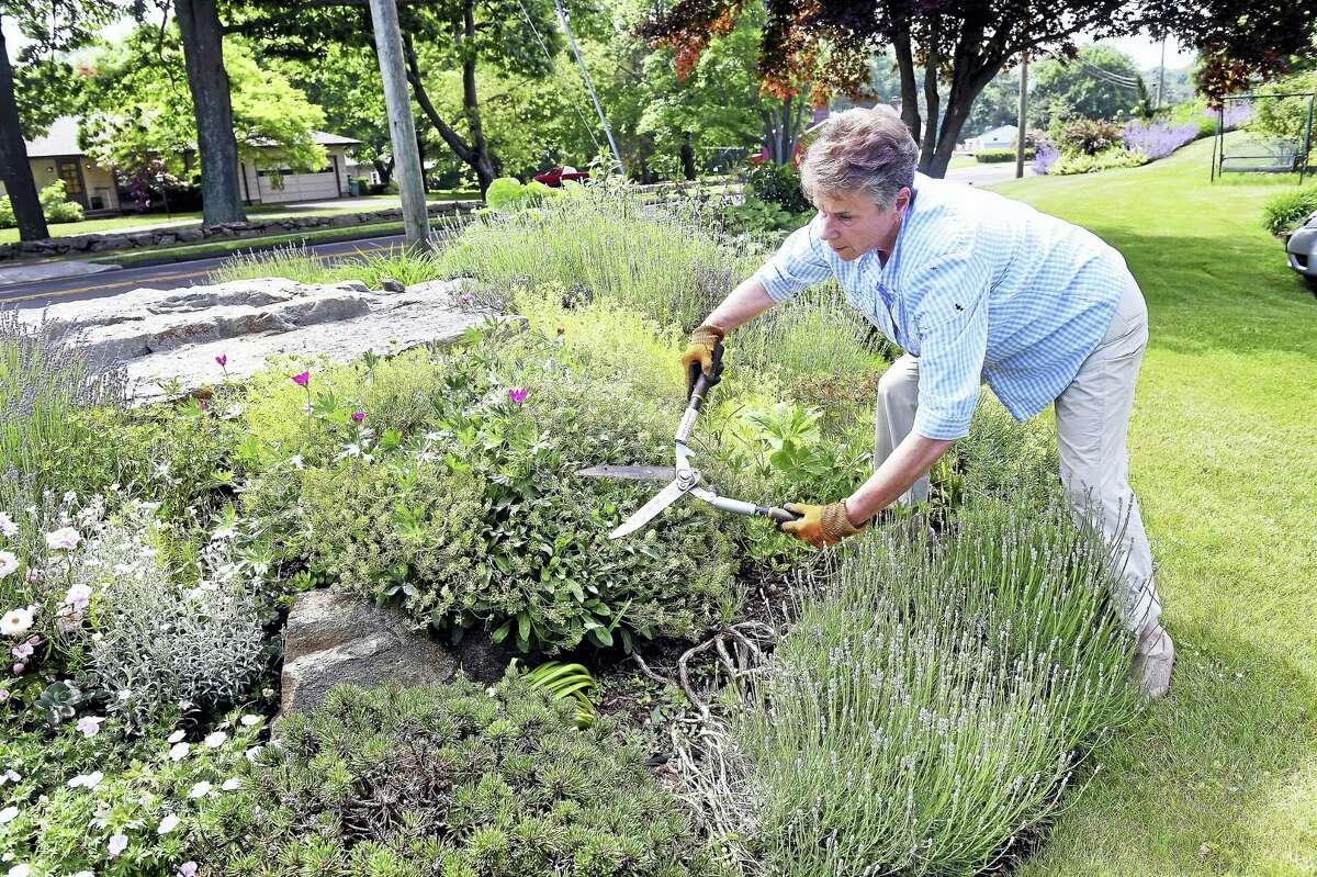 Ann Freeman trims her spring perennials in front of her home on Kenwood Lane in Branford.