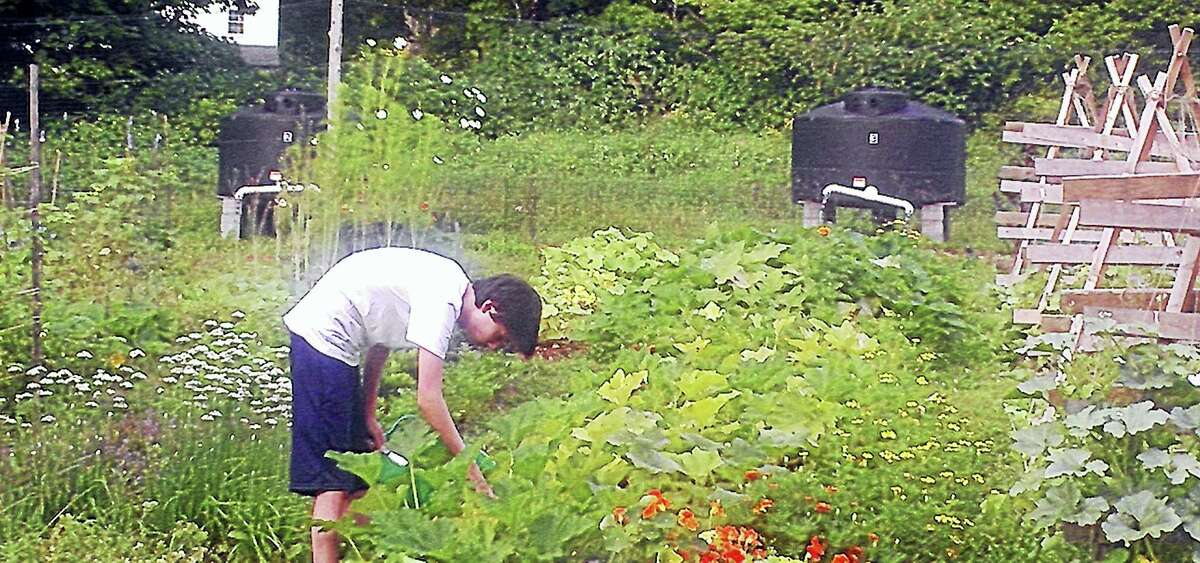Washington, CT - Judea Garden, a Steep Rock Association community project, is offering two paid summer internships from July 5 through August 26, 2016. Applicants must be either high school students (16 years old by end of summer) or college students (through class of 2016) and be available to work 20 hours/week in garden located in Washington, Connecticut. Now in its eighth season, Judea Garden has grown, harvested and distributed over 25,000 lbs. of fresh produce to members of our community with limited financial resources through local food banks, senior centers and social service agencies. The Internship will provide lessons on Sustainable Agriculture and current food issues while growing vegetables for local food banks. Interns will: identify and control insects and diseases; identify weeds and their properties; use succession harvesting through planting for fall crops; harvest and distribute foods, and participate in all garden tasks. The application is available online at www.steeprockassoc.org or by emailing denise.arturi@steeprockassoc.org. For more information, call (860) 868-9131.