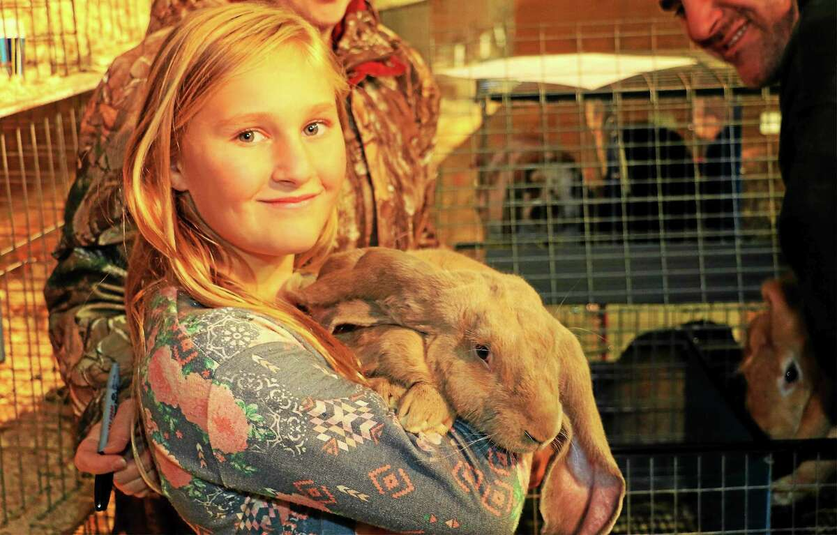Breann Neher, 11, of New Hartford, hold a English Lop, one of the family's 53 rabbits. Breann is a member of the Torrington-based Busy Bunnies 4H Club.