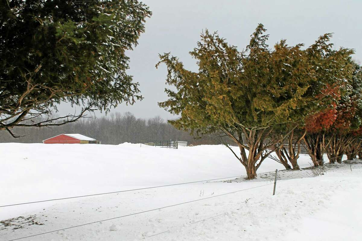 Snow in the Northfield section of Litchfield on Monday.