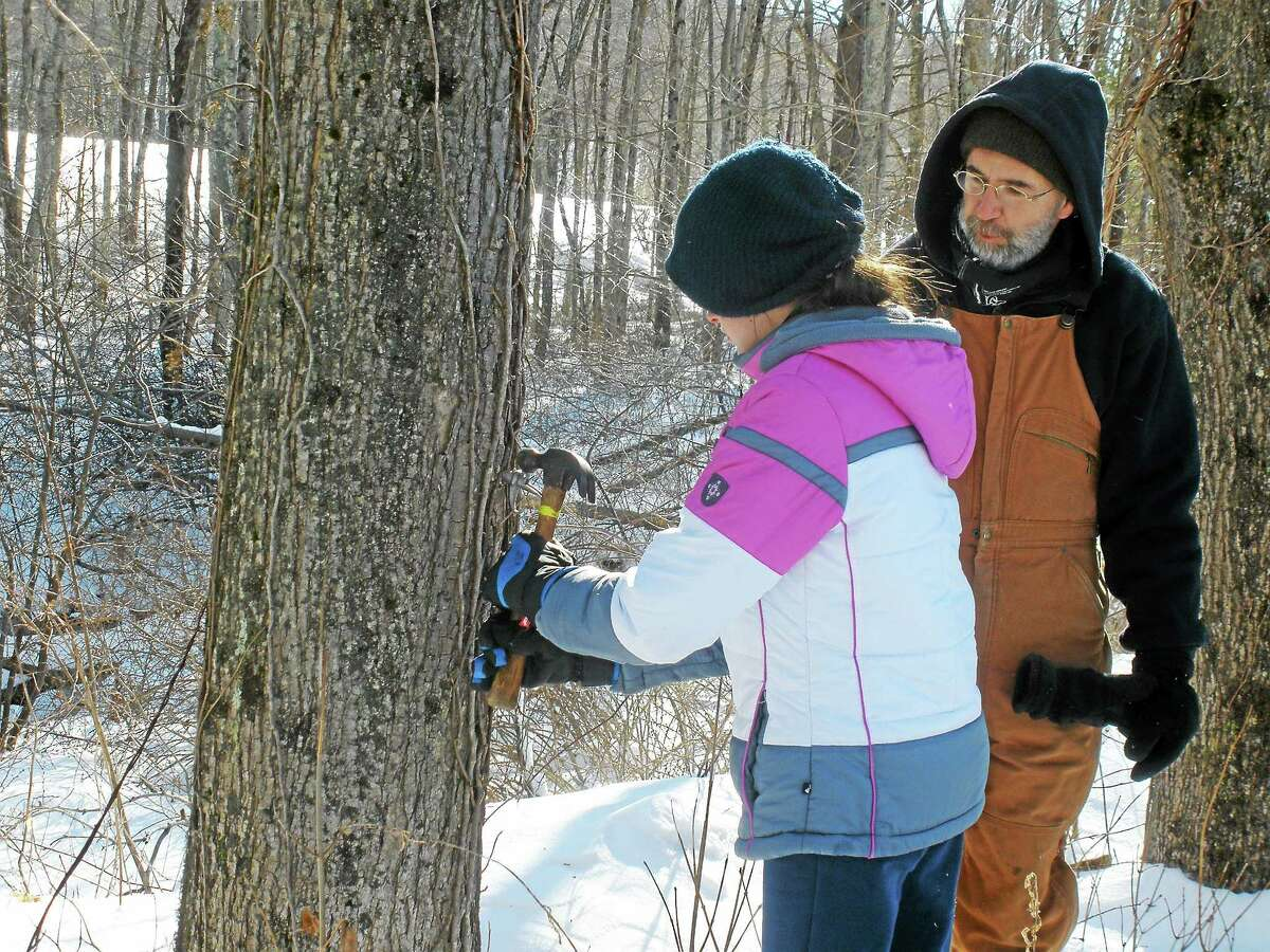 Harry Gerowe, a sugar maker and volunteer at Flanders Nature Preserve instructs Kathleen Manning, 11, on how to correctly tap a tree.