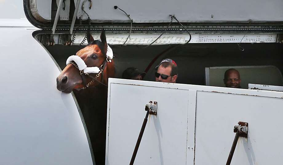 American Pharoah peeks out of the plane after landing at the Atlantic City International Airport on Wednesday. Photo: Ben Fogletto — The Press Of Atlantic City  / The Press of Atlantic City