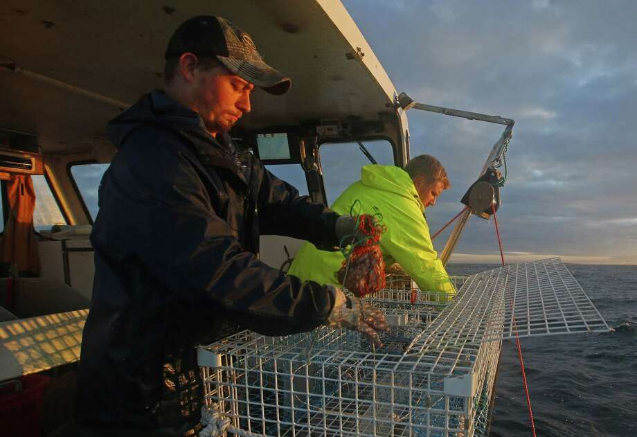 In this July 2014 file photo, sternman Brandon Demmons, left, places a bait bag containing herring into a lobster trap while fishing off Monhegan Island, Maine. Photo: Associated Press  / AP