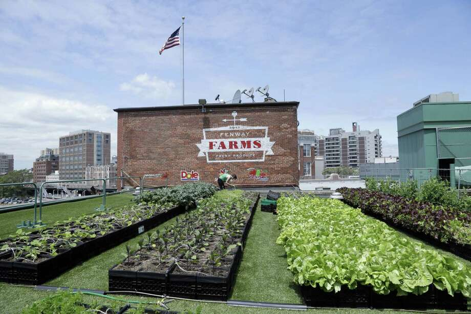 In this photo taken June 4, a produce garden grows on a rooftop on the third-base side of Fenway Park in Boston. Photo: The Associated Press  / AP