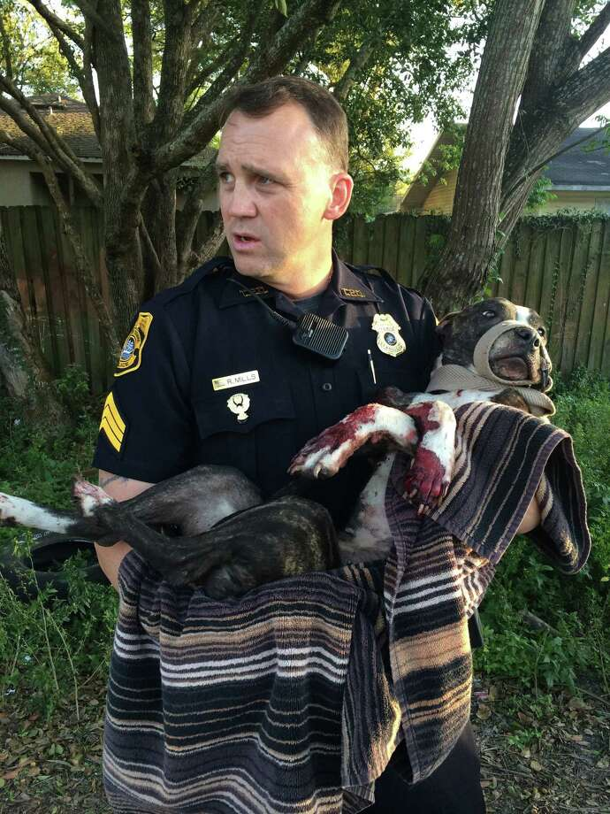 FILE - In this March 4, 2015, file photo, Tampa Police Department Sgt. Rich Mills carries an injured female dog that was left tied to a railroad track in Sulfur Springs, Fla. The Tampa Police Department announced Thursday, March 12, 2015, that two Tampa teens have been arrested for shooting the dog that was found tied to the tracks. (AP Photo/Tampa Police Department, File) Photo: AP / Tampa Police Department