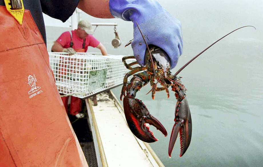 In this undated photo, a sternman holds a lobster caught off South Bristol, Maine. Photo: AP Photo/Robert F. Bukaty, File  / Copyright 2016 The Associated Press. All rights reserved. This material may not be published, broadcast, rewritten or redistribu