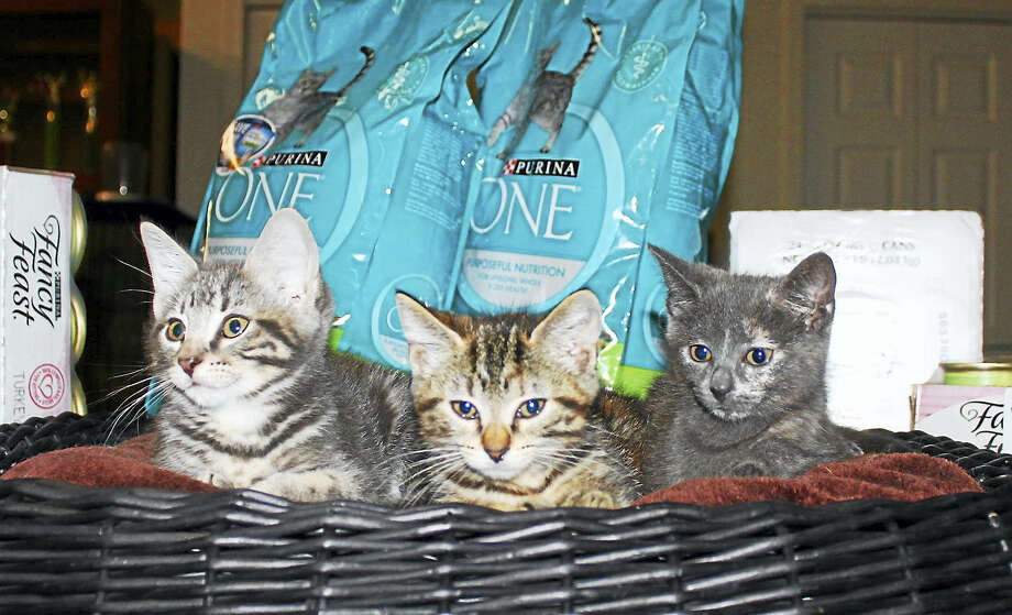 This trio of cats is waiting for the Branford Compassion Club to get restocked. Photo: Photo Courtesy Of Krista Hanniford