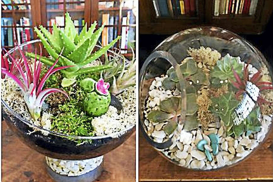 Contributed photo Lush, colorful terrariums by Audra Viehland. Photo: Digital First Media