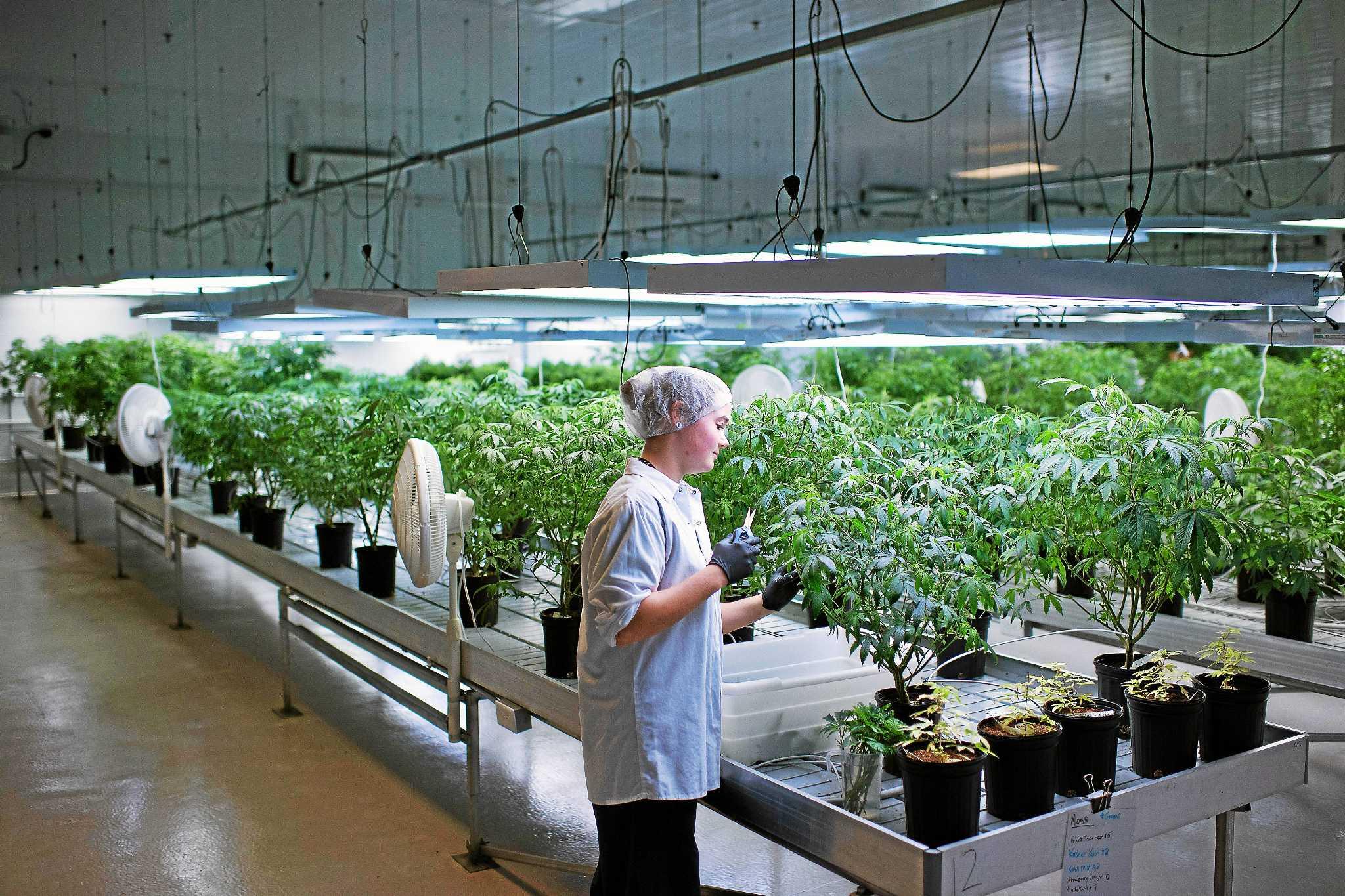 Partners in pot: Marijuana businesses seek novel collaborations