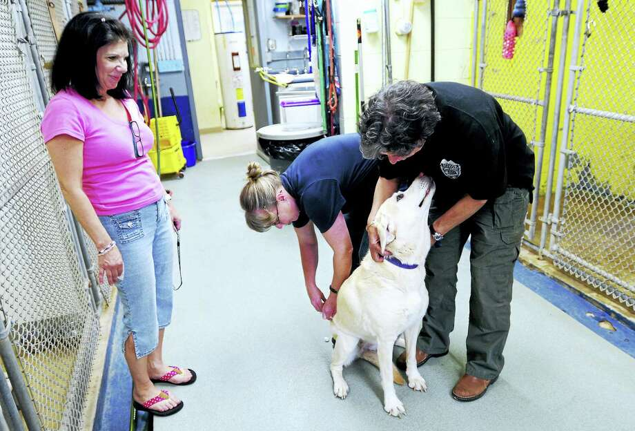 State department of health will now only test animals for rabies if a human has been exposed to a potentially rabid animal. Animals suspected of having rabies that have not come in contact with humans will not be tested by the state. Some pet owners worry that people won't be able to afford to pay for the testing if their animal is exposed. Photo: New Haven Register File Photo