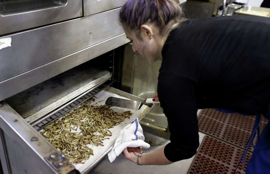 Genevieve Gladson Rainville turns over mealworms as they bake in an oven in San Francisco. Photo: Ben Margot — The Associated Press  / AP