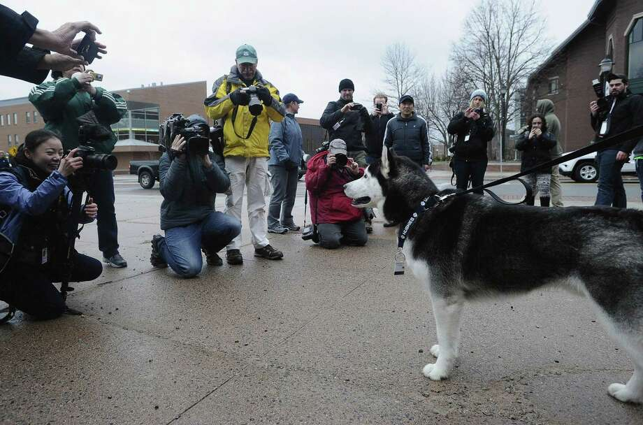 Fans and media photograph UConn's mascot, Jonathan, before the arrival of the women's basketball team at a rally in Storrs on Wednesday. Photo: Jessica Hill — The Associated Press  / AP2015