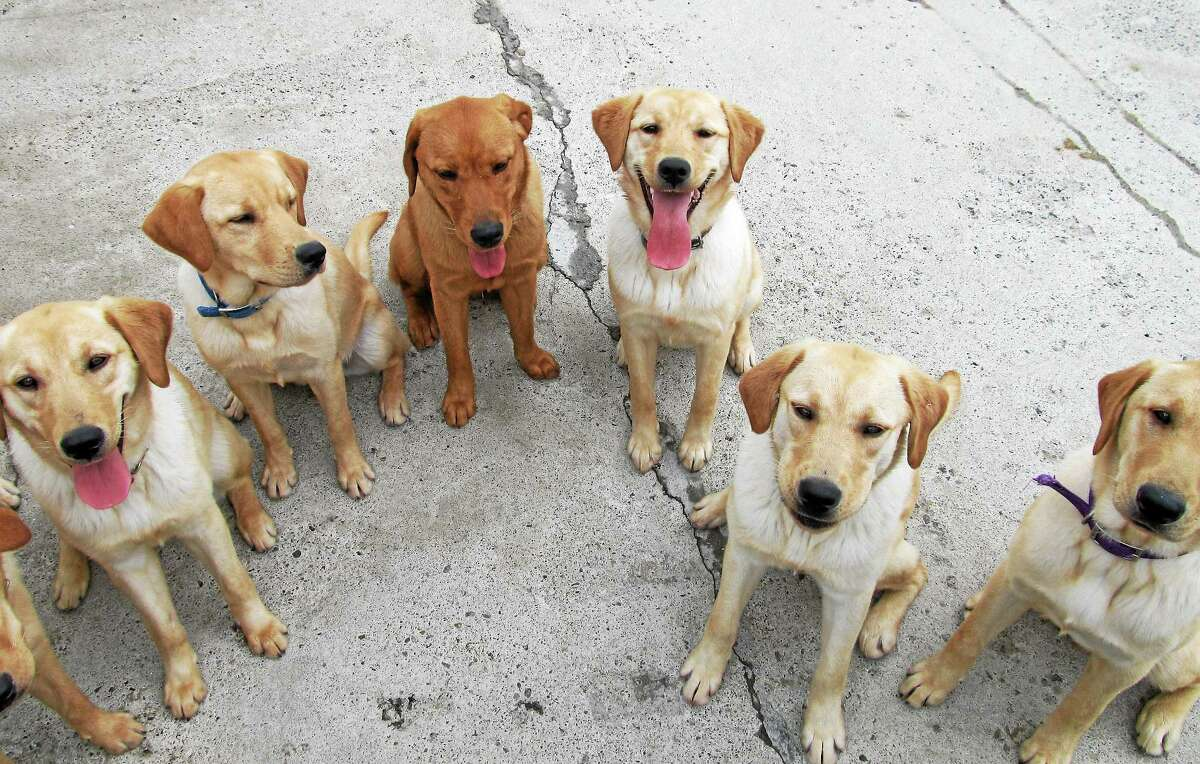 Contributed photo ECAD provides children at summer camp to have hands-on experience with training puppies.