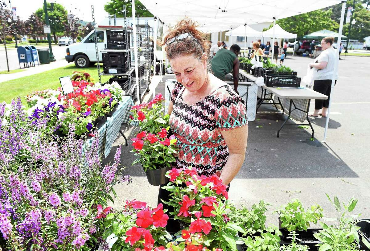 Cynthia Coppola of East Haven picks out flowers from Vaiuso Farms of Branford at the East Haven Farmers Market in the parking lot of East Haven Town Hall last month.