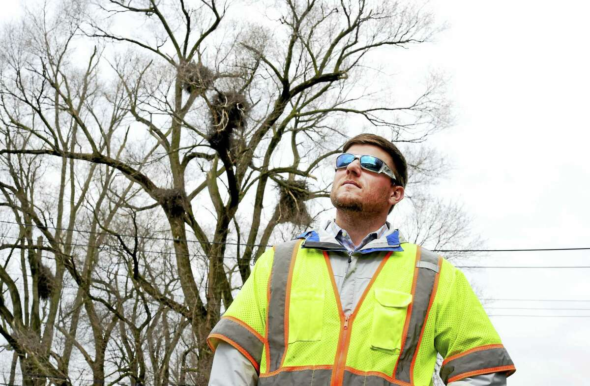 Shawn Crosbie, an environmental analyst for UIL Holdings, near power lines that are near a nesting area for eagles along Ella T. Grasso Boulevard in New Haven.