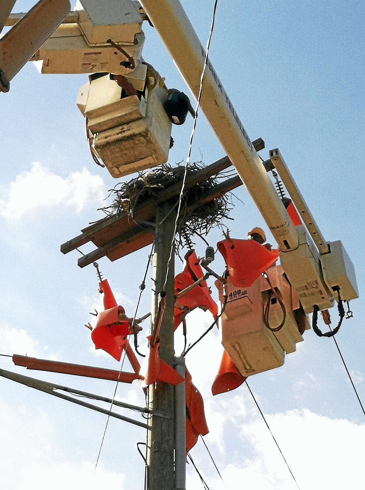 Osprey nest in Westport.