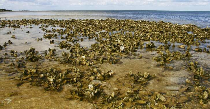 Intertidal oyster reefs, which provide crucial marine habitat and help protect bay shores from storm surges, will be off limits to commercial and recreational harvest under a package of regulation changes aimed at protecting and enhancing Texas' beleaguered oyster stocks.
