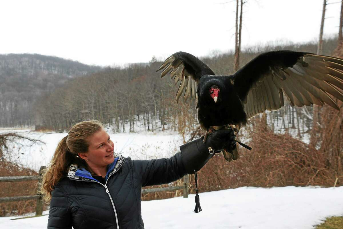 Erin O'Connell with Norabo, one of 17 non-releasable birds of prey that live permanently at Sharon Audubon Center.