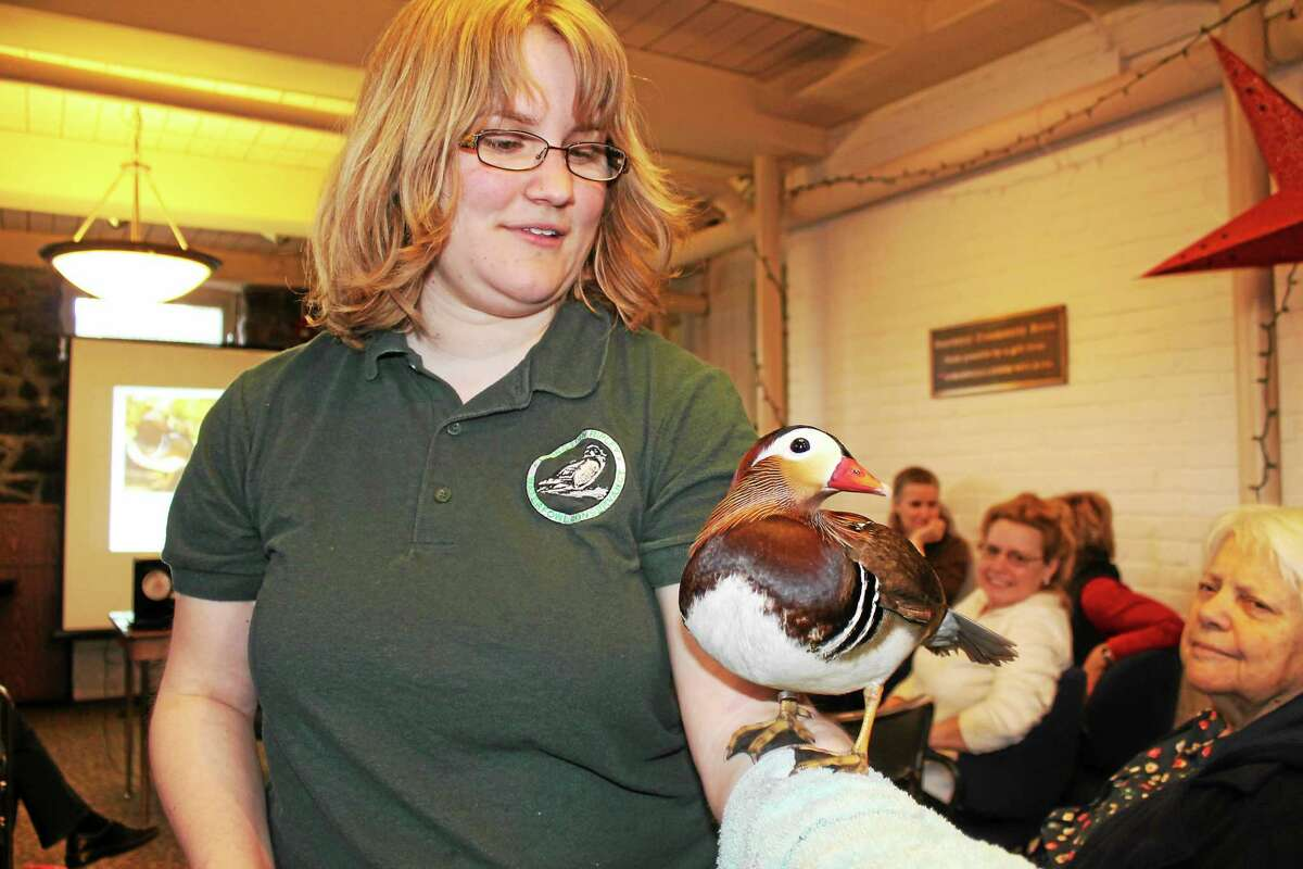 Livingston Ripley Waterfowl Conservancy Director of Education Jessica Caton takes Cherrio the Mandarin Duck out for a stroll among the crowd at Saturday's program.