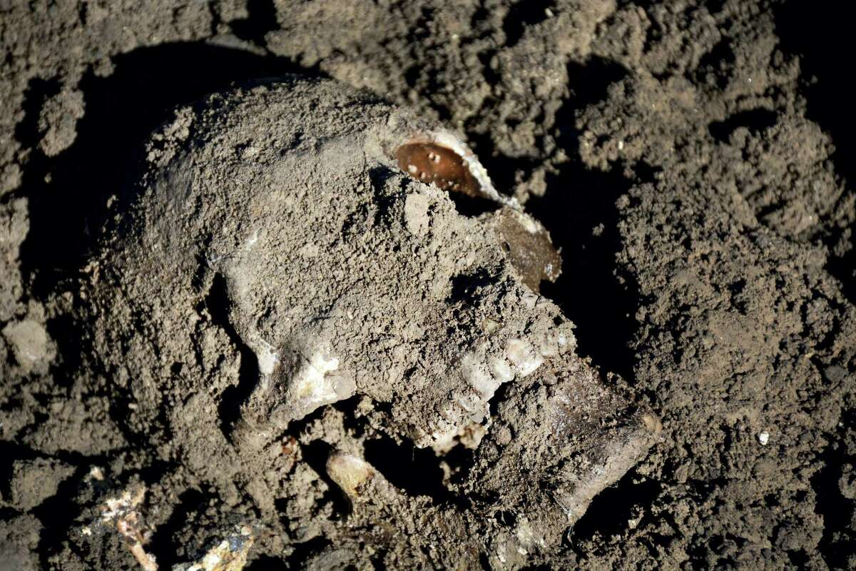 This image released by the the Mass Graves Directorate of the Kurdish Regional Government shows a human skull in a mass grave containing Yazidis killed by Islamic State militants in the Sinjar region of northern Iraq in May 2015. An analysis by The Associated Press has found 72 mass graves left behind by Islamic State extremists in Iraq and Syria, and many more are expected to be discovered as the group loses territory.