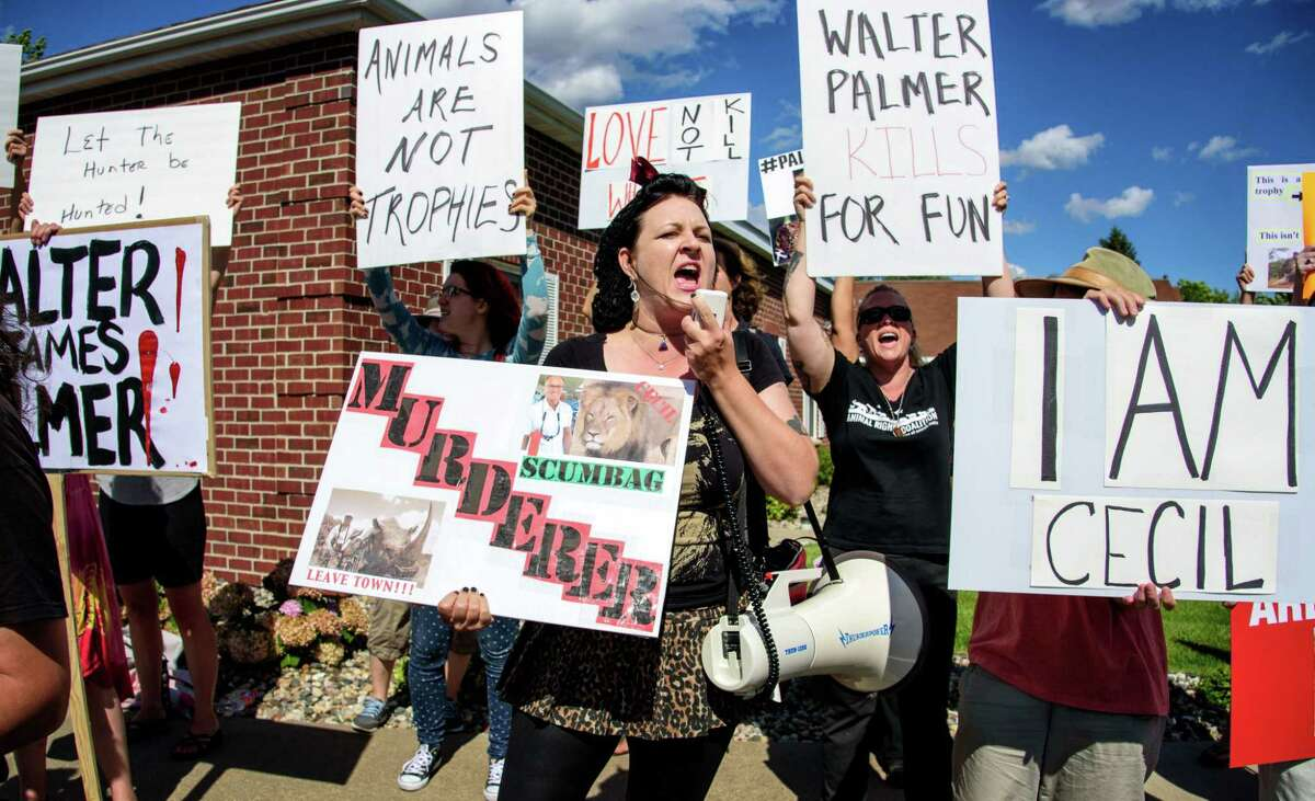 Rachel Augusta led a group of protestors from Animal Rights Coalition and Minnesota Animal Liberation gathered in front of Dr. Walter Palmer's dental practice on July 29, 2015 in Bloomington, Minn. Palmer has been under fire since his involvement in the death of Cecil the Lion became public.