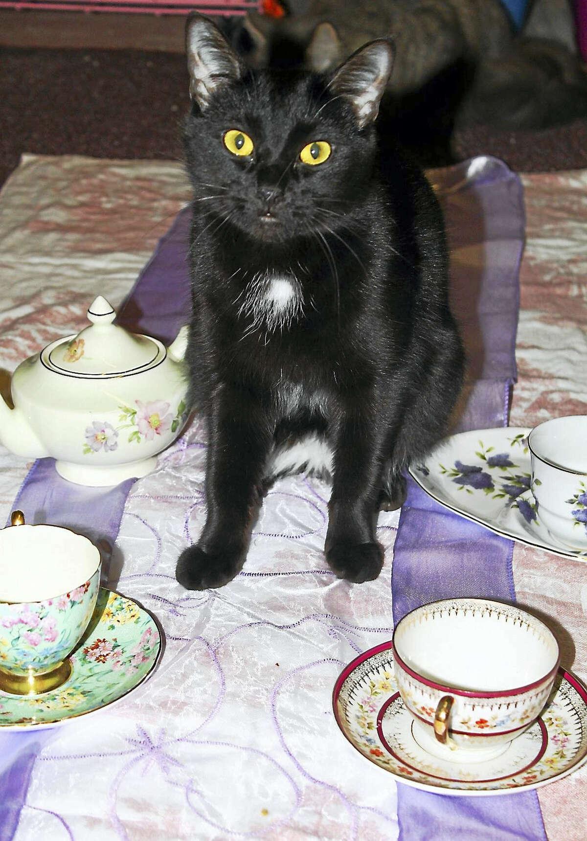 """Artemis is all set for """"Teacups & Catwalk."""""""