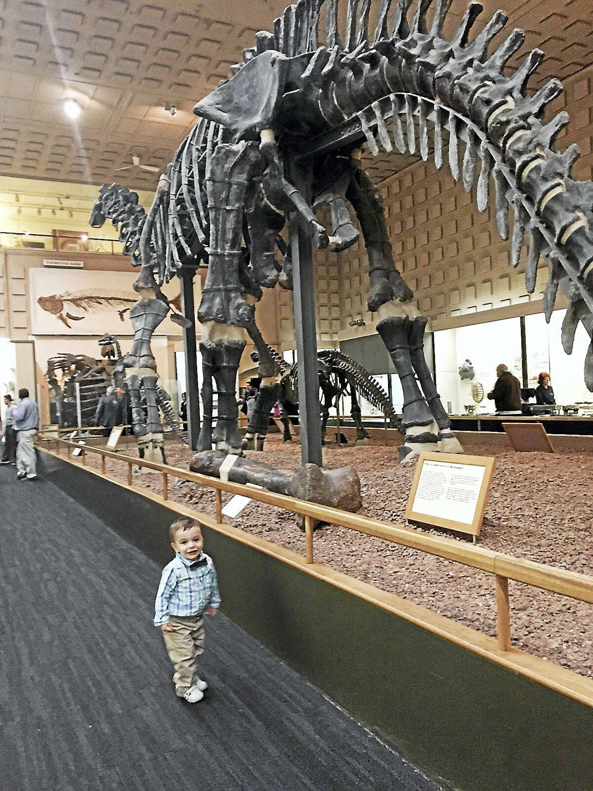 Young Dylan Shyket stands near an old brontosaurus in the Hall of the Dinosaurs.