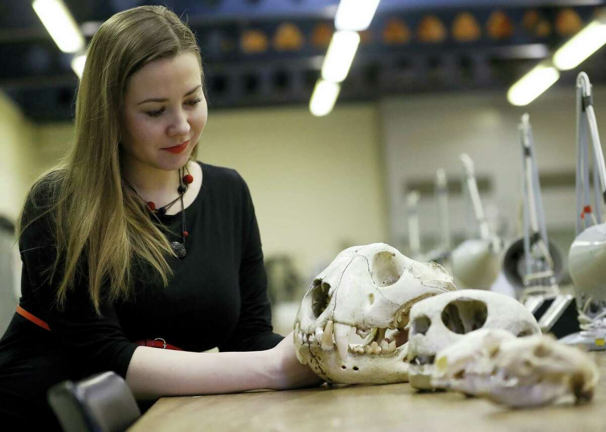 In this photo taken on Friday, Dec. 2, 2016, university lecturer Joanna Bagniewska looks at animal skulls at the Zoology department of the University of Reading in England. Like many foreign scientists in Britain, Joanna Bagniewska was devastated when Britons voted to leave the European Union. The biology lecturer, a Polish migrant who found Britain a welcoming place to build her academic career over a decade, is suddenly seeing her job security and research prospects up in the air. (AP Photo/Frank Augstein)
