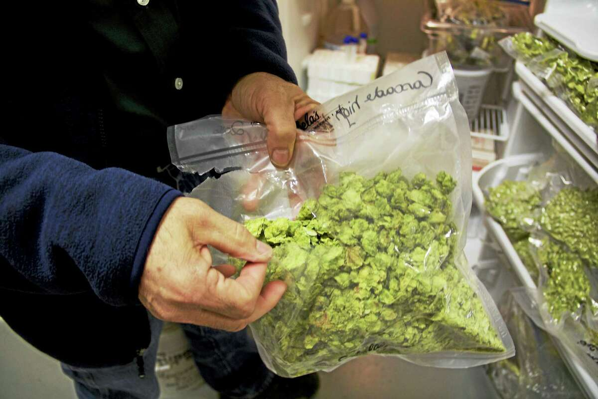 Hops can be freeze dried and preserved for later use in beer brewing. Fresh hops and freeze dried hops will have different flavors. These hops were grown at CAES in Windsor.