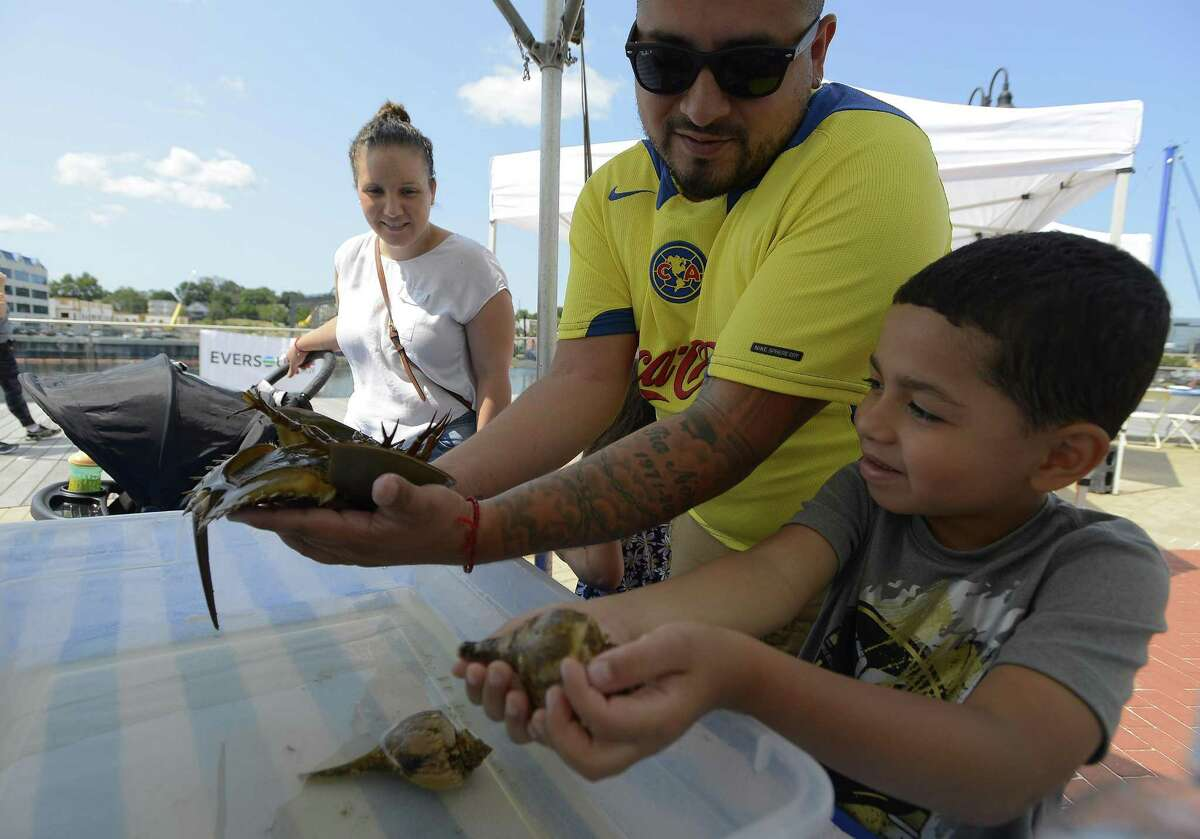 Diego Palomo, 5, of Stamford, at right, holds a shell containing a Hermit Crab while looking at his father Gerardo holding a Horse Shoe Crab while taking in the discovery Long Island activity during Soudwaters Harborfest 17 in Stamford, Connecticut on Saturday, August 25, 2017.