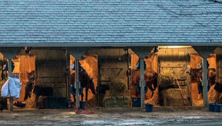 The shed row is very busy in trainer Chad Brown's training barn even in the rain on the Oklahoma Training Center Friday Aug. 17, 2017 in Saratoga Springs, N.Y. (Skip Dickstein/Times Union)