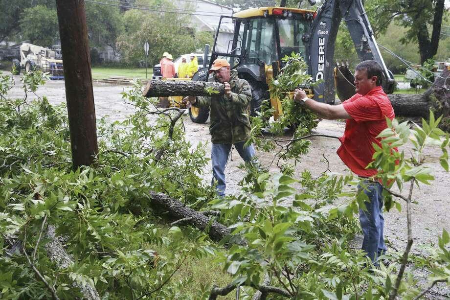 City crews in Gonales clean up the scene of a large pecan tree which brought down