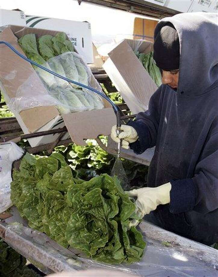 FILE - In this Thursday, Aug. 16, 2007 file photo, a lettuce worker washes romaine lettuce in Salinas, Calif. Leafy green vegetables were the leading source of food poisoning over an 11-year period, federal health officials say, Tuesday, Jan. 29, 2013. However, the most food-related deaths were from contaminated chicken and other poultry. (AP Photo/Paul Sakuma, File) Photo: AP / AP