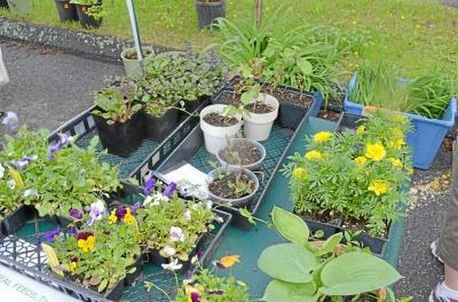 Kate Hartman/Register Citizen. Plants were donated by members of the Torrington Trails Network, locals and businesses.