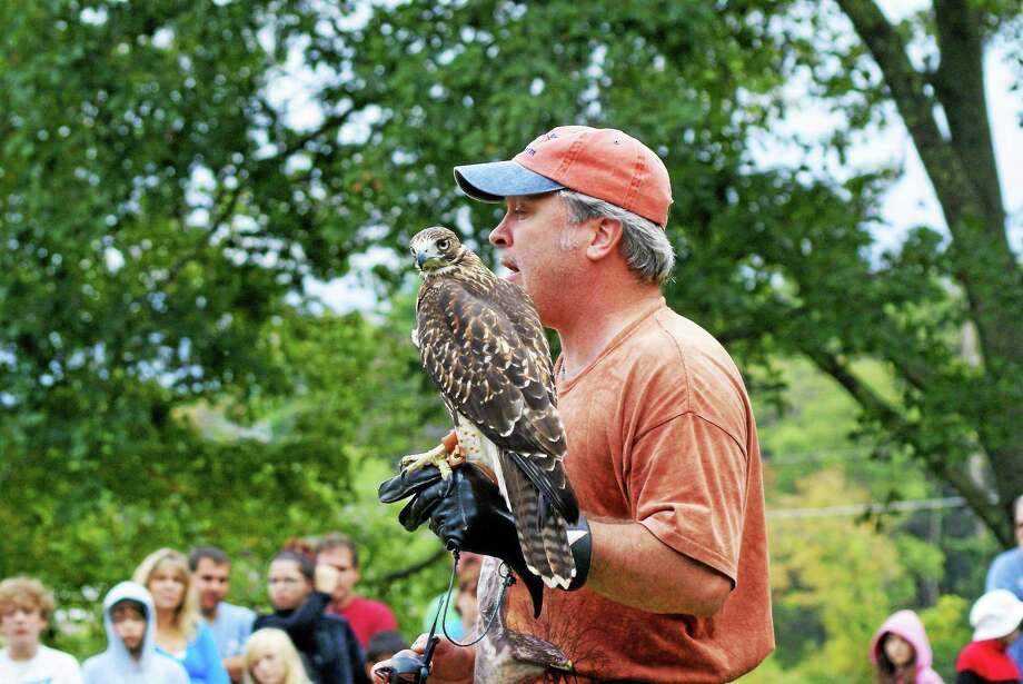 Brian Bradley holds a hawk during a nature festival Saturday at White Memorial Conservation Center in Litchfield. Photo: Katherine Griswold — Special To The Register Citizen