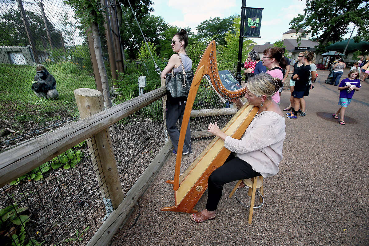 In this Aug. 27, 2014 photo Terri Tacheny plays her harp outside the Primate House at Como Zoo in in St. Paul, Minn. Tacheny, 57, a zoo volunteer, plays once a month for an appreciative audience that ambles down to their barrier as soon as Tacheny begins setting up her harp. Sheís been doing it for nearly a decade. (AP Photo/The Star Tribune, Elizabeth Flores)