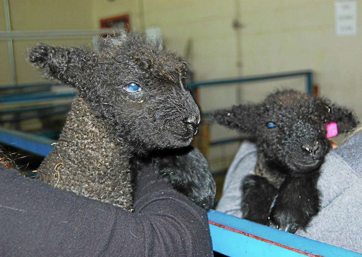 Twins Loretta and Dolly were born Sunday, their names coming from country music singers. See a gallery of photos online at media.RegisterCitizen.com.