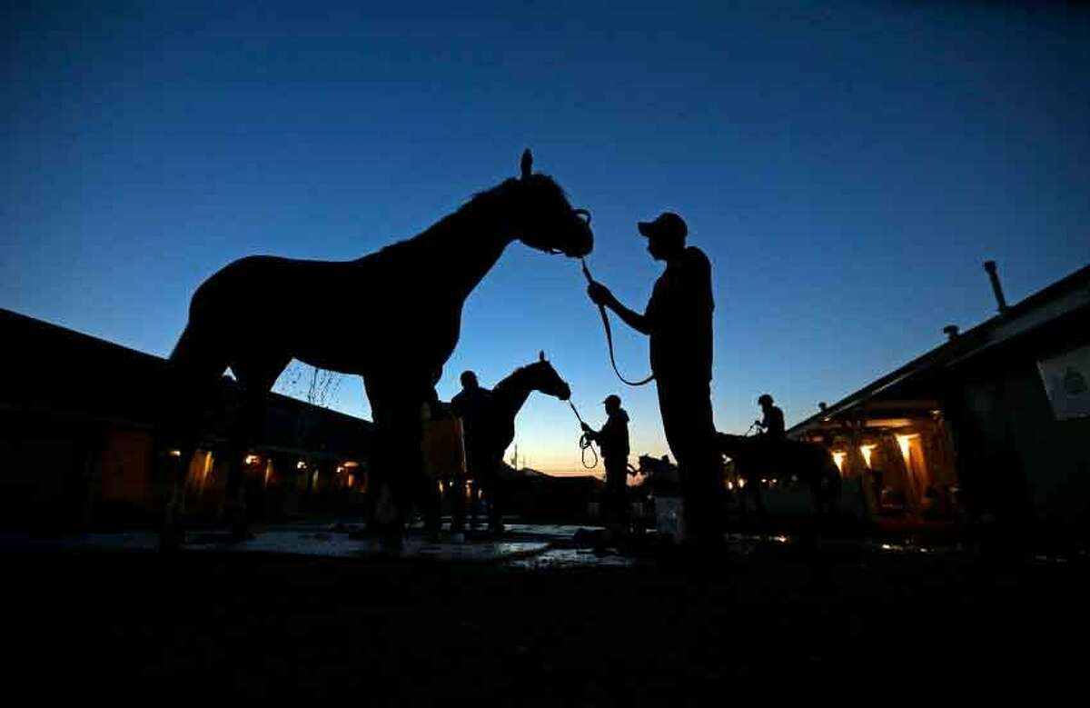 Horses are washed after their morning workouts at Churchill Downs Wednesday, May 1, 2013, in Louisville, Ky. (AP Photo/Charlie Riedel)