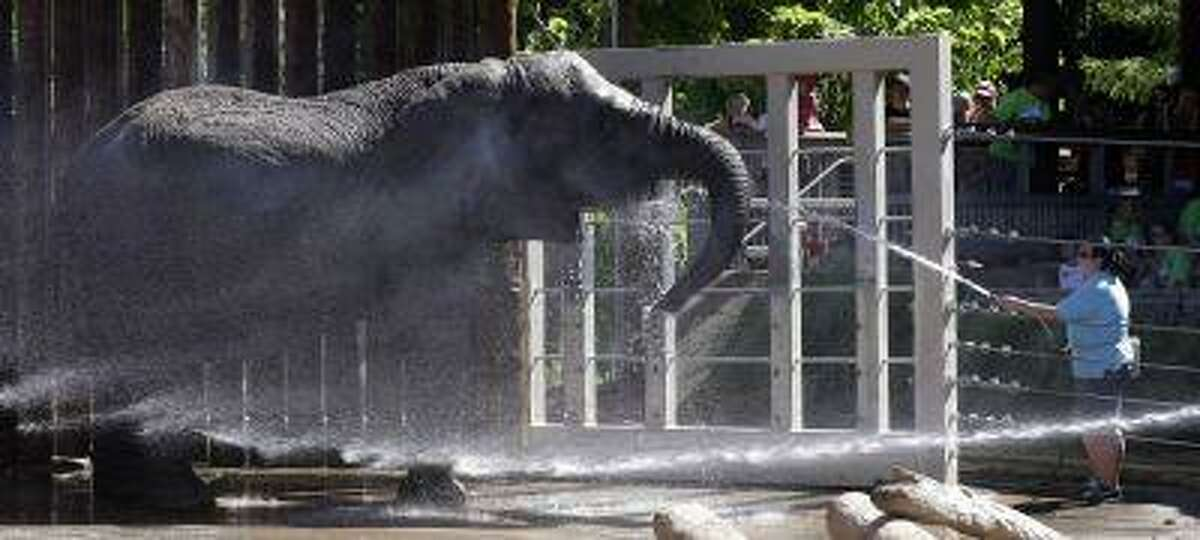 Elephants at Utah's Hogle Zoo are cooled off with water hoses Friday, June 28, 2013, in Salt Lake City.
