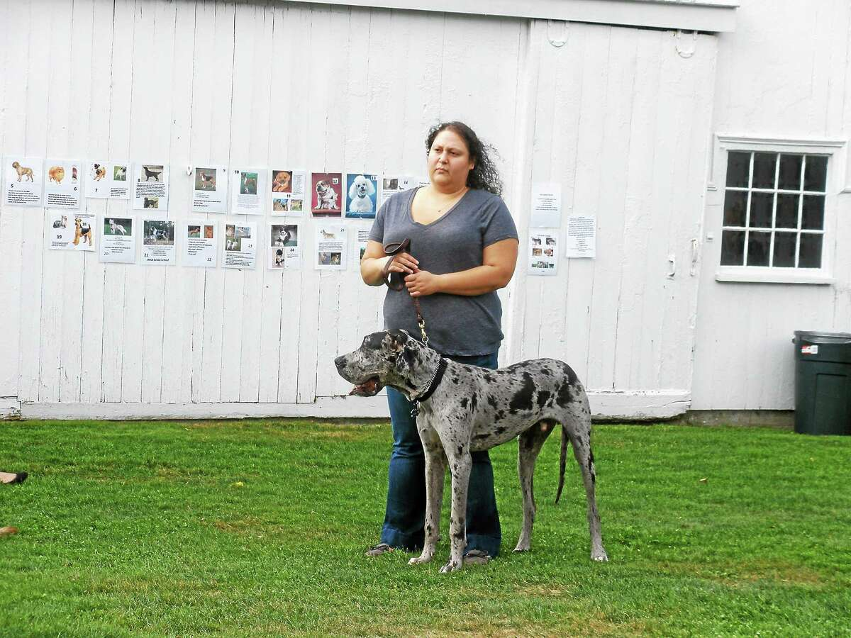 The Bellamy-Ferriday House and Garden in Bethlehem hosted its 13th annual dog show Saturday with a range of activities for canines and their owners.