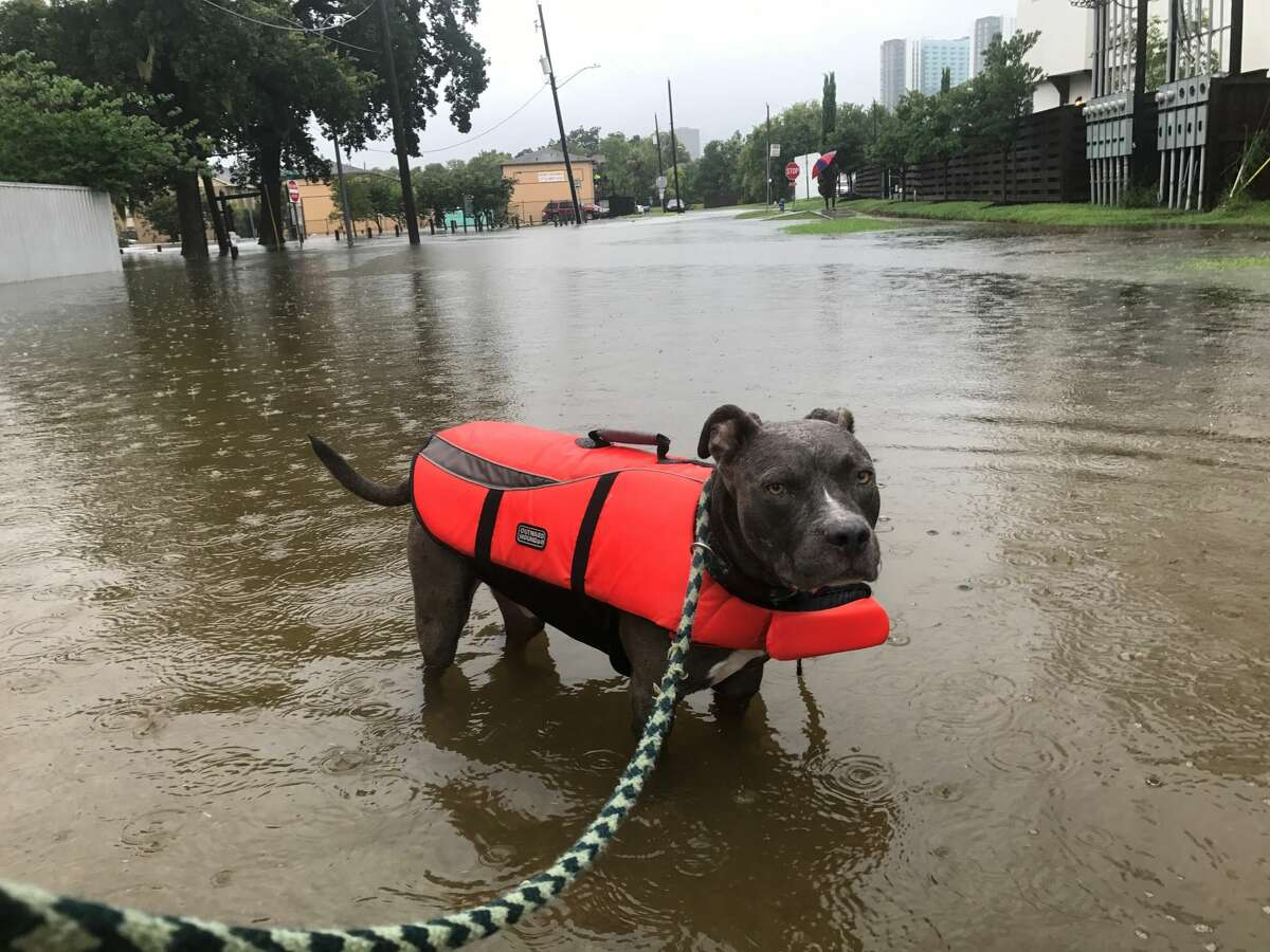 Reader photos from Hurricane HarveyAs Hurricane Harvey descended on Houston, residents braved the rain to share photos of flooding, damage, and their storm setups. >> See more photos sent in during the storm.