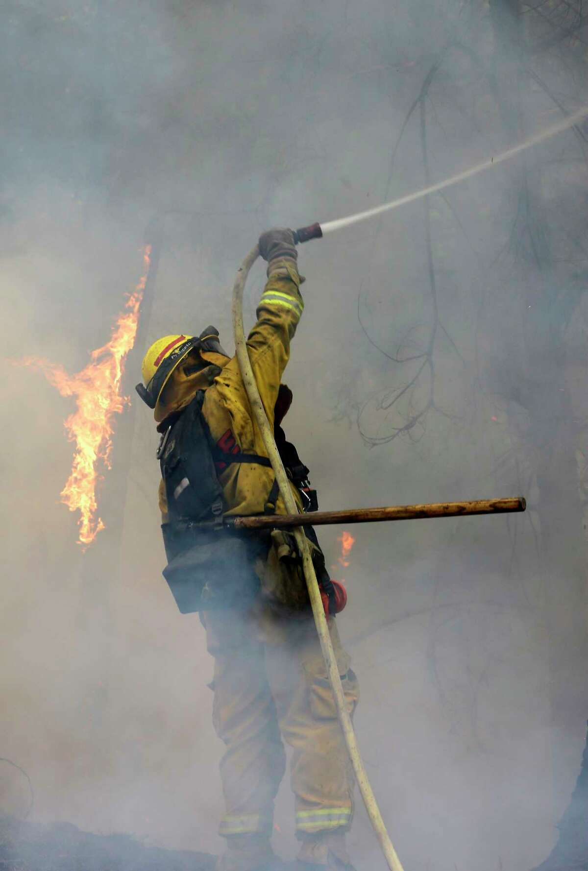A firefighter puts water on a burning tree as flames approach a containment line, while fighting the King fire near Fresh Pond, Calif., Thursday, Sept. 18, 2014.