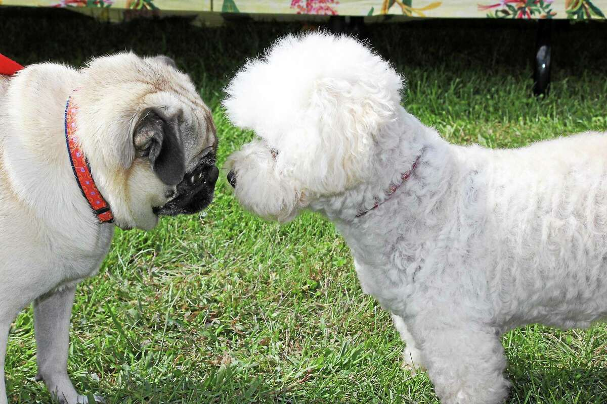 Submitted photo - Bellamy-Ferriday House & Garden The Bellamy-Ferriday House & Garden will its 13th annual dog show Saturday in Bethlehem.
