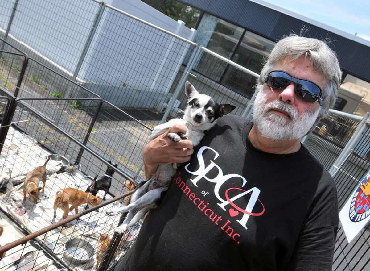 Frederick Acker of the SPCA of Connecticut, holds one of the 109 small dogs, mostly Chihuahua's, that were flown in from California for adoption around the state in July 2012.